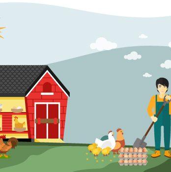 Yumurta Üreten Tarımsal İşletmeler